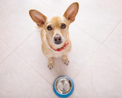 pes dieta