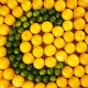 vitamin c hiša zdravja